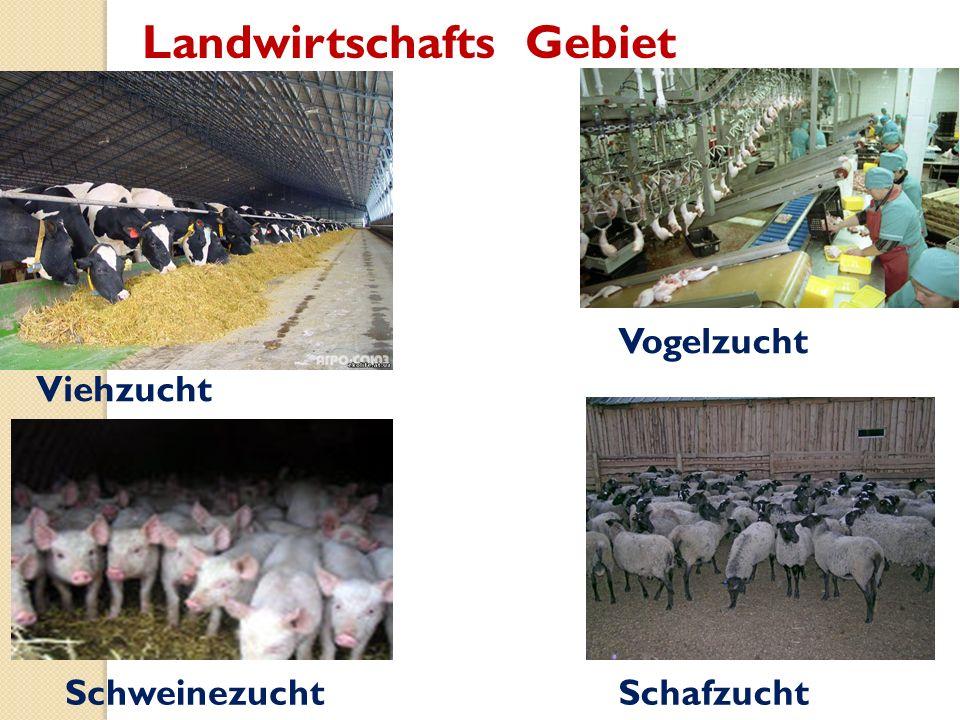 Landwirtschafts Gebiet Viehzucht Vogelzucht SchweinezuchtSchafzucht