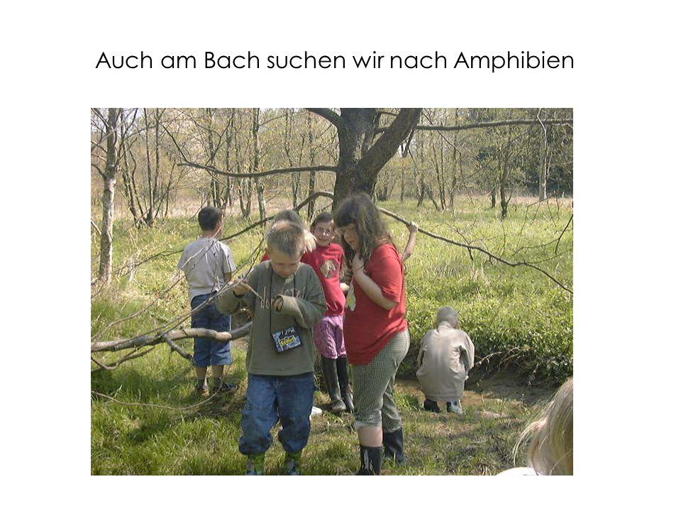Auch am Bach suchen wir nach Amphibien