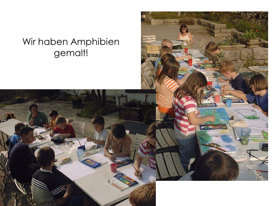 Wir haben Amphibien gemalt!
