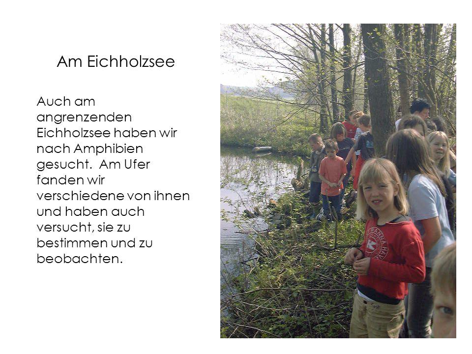 Am Eichholzsee Auch am angrenzenden Eichholzsee haben wir nach Amphibien gesucht.