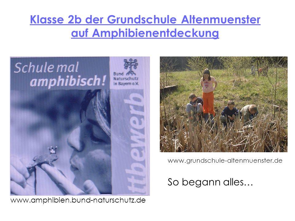 Klasse 2b der Grundschule Altenmuenster auf Amphibienentdeckung So begann alles… www.amphibien.bund-naturschutz.de www.grundschule-altenmuenster.de
