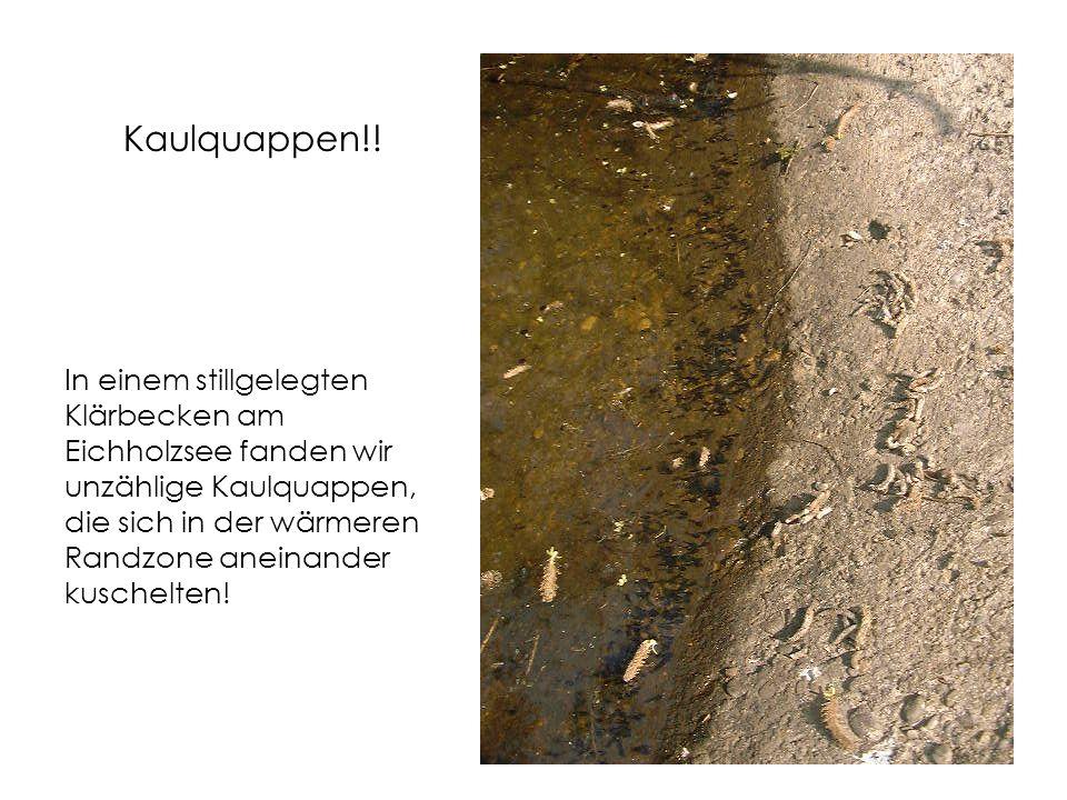 Kaulquappen!.