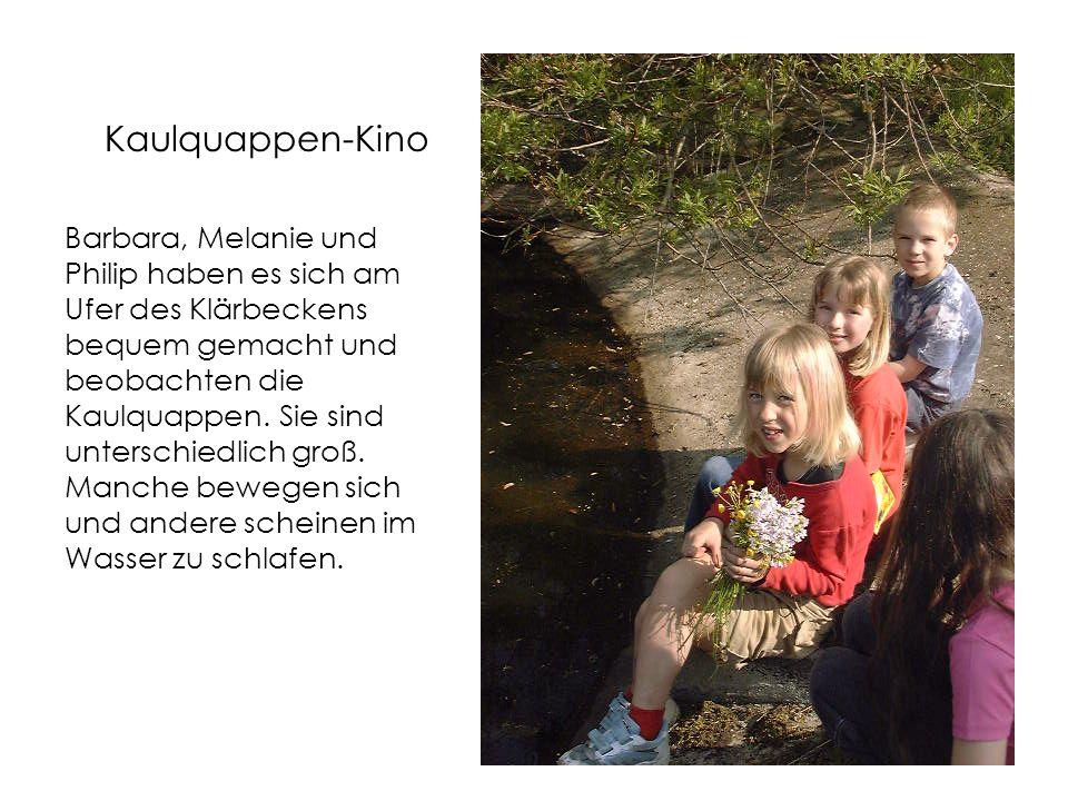 Kaulquappen-Kino Barbara, Melanie und Philip haben es sich am Ufer des Klärbeckens bequem gemacht und beobachten die Kaulquappen.