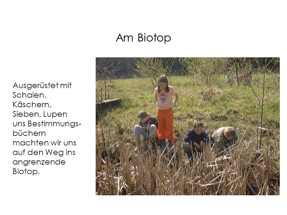 Am Biotop Ausgerüstet mit Schalen, Käschern, Sieben, Lupen uns Bestimmungs- büchern machten wir uns auf den Weg ins angrenzende Biotop.