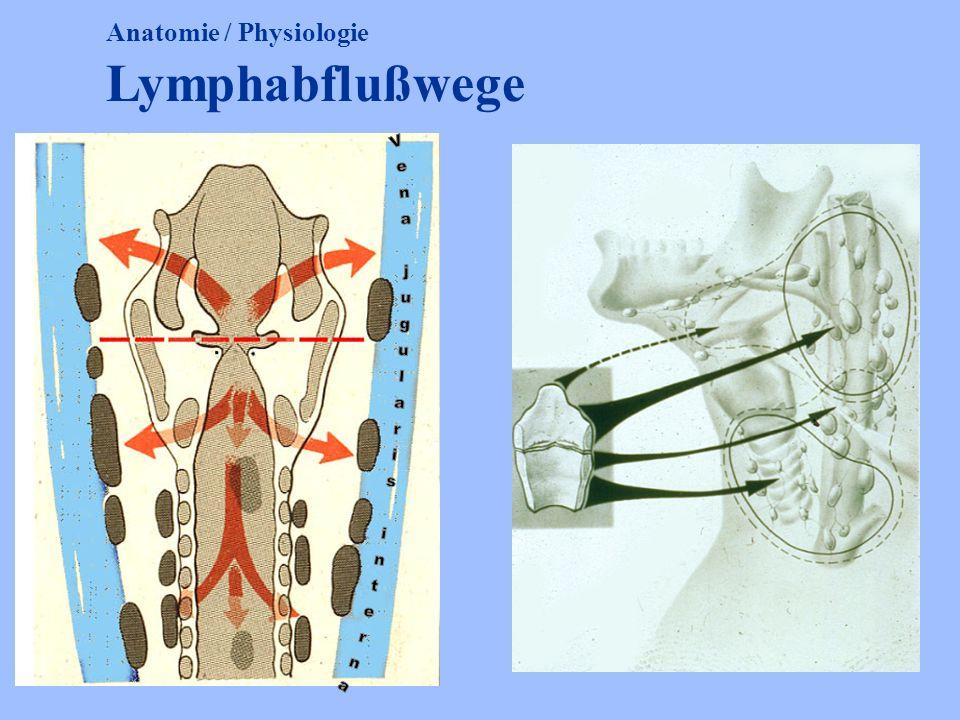 Anatomie / Physiologie Lymphabflußwege