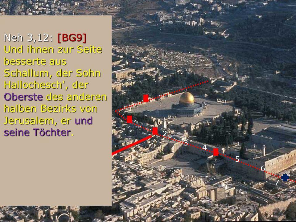 2 3 4 5 6 7 8 Neh 3,12: [BG9] Und ihnen zur Seite besserte aus Schallum, der Sohn Hallochesch', der Oberste des anderen halben Bezirks von Jerusalem,