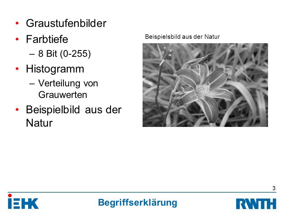 Begriffserklärung Graustufenbilder Farbtiefe –8 Bit (0-255) Histogramm –Verteilung von Grauwerten Beispielbild aus der Natur 3 Beispielsbild aus der Natur