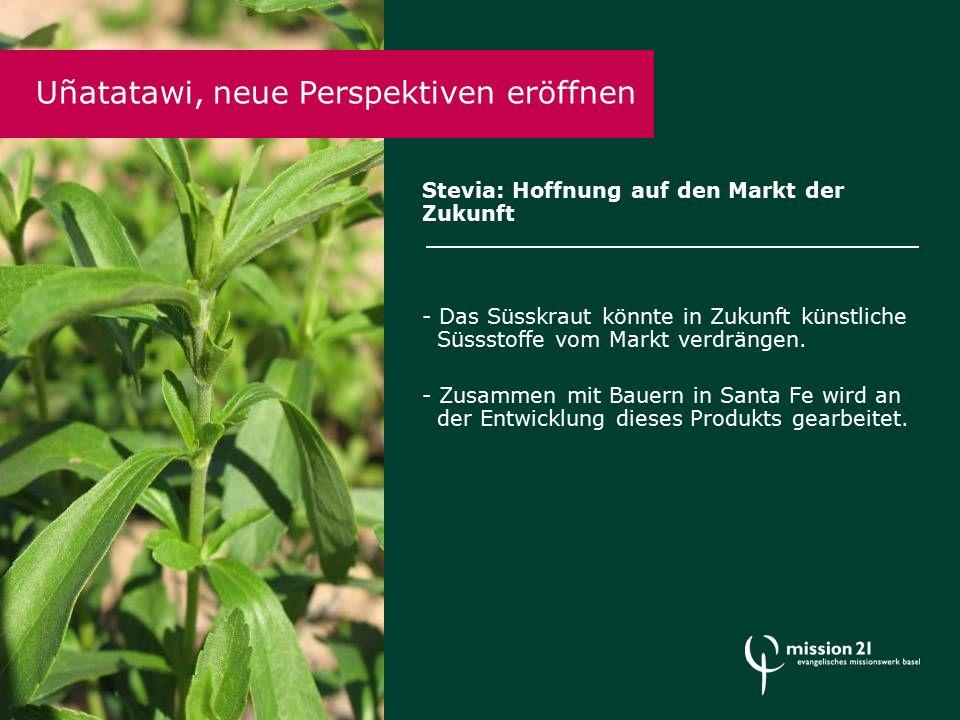 Stevia: Hoffnung auf den Markt der Zukunft - Das Süsskraut könnte in Zukunft künstliche Süssstoffe vom Markt verdrängen.