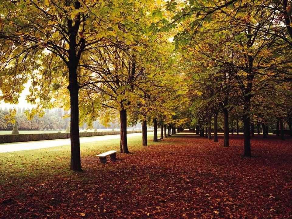 1.Im September ist oft das Wetter.2.Die Blätter an den Bäumen sind bunt:,,.