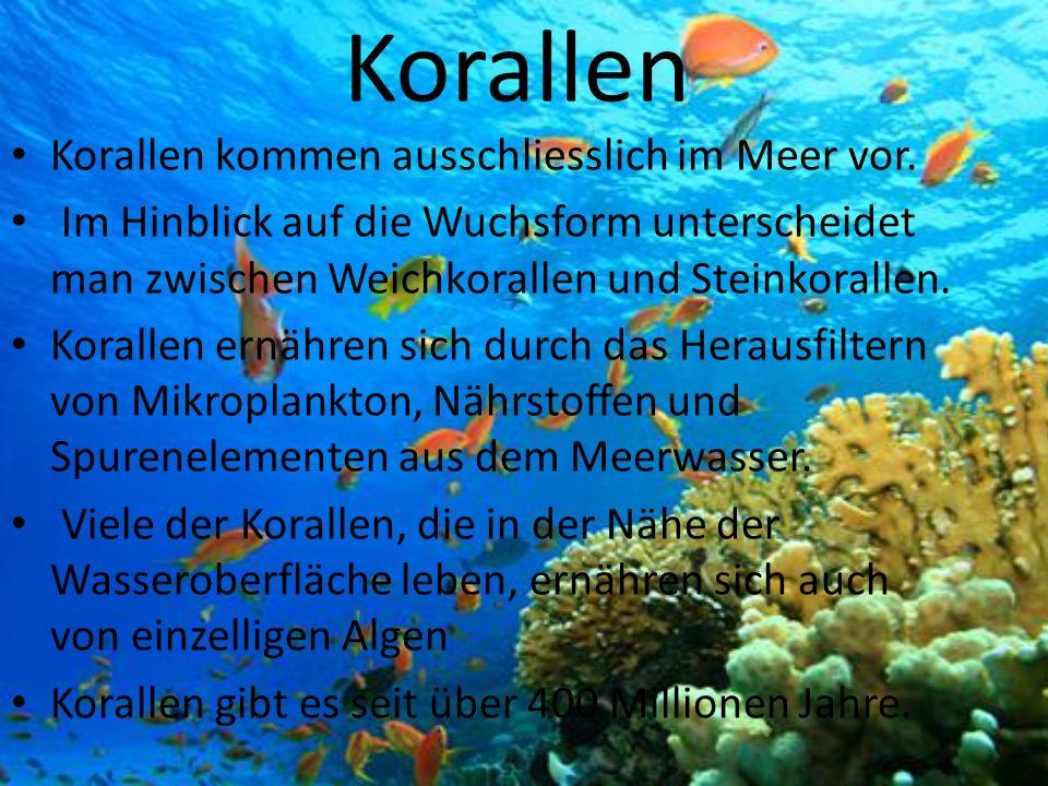 Korallen Korallen kommen ausschliesslich im Meer vor. Im Hinblick auf die Wuchsform unterscheidet man zwischen Weichkorallen und Steinkorallen. Korall