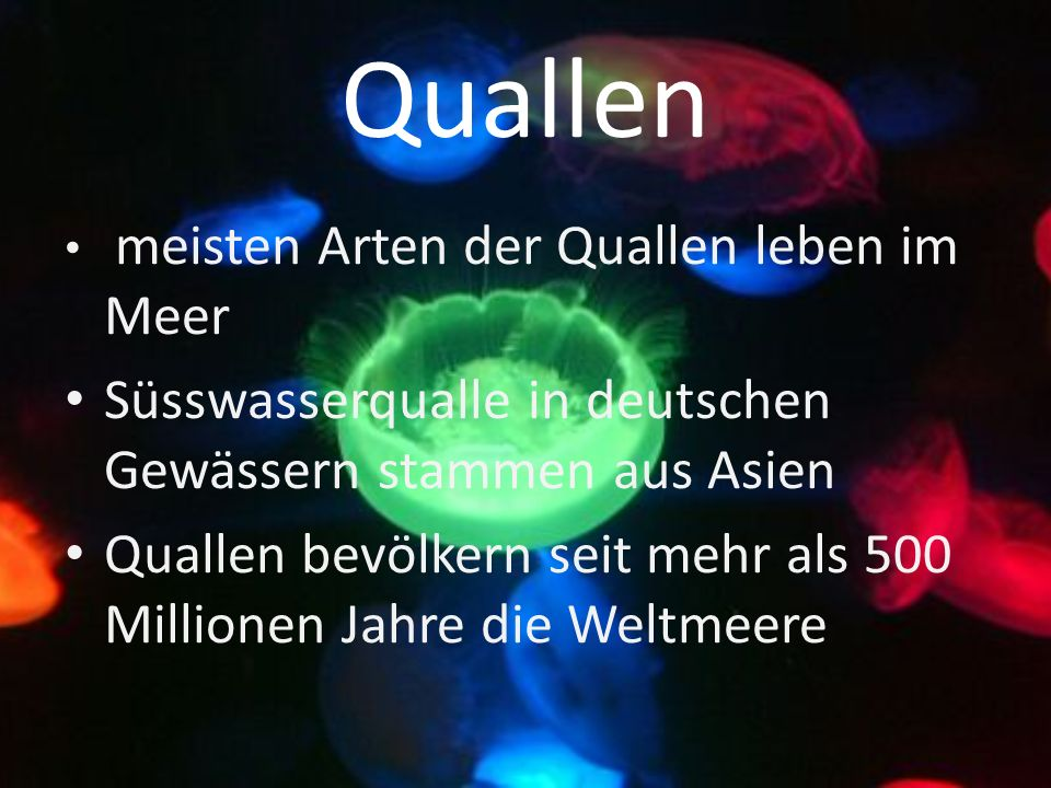 Quallen meisten Arten der Quallen leben im Meer Süsswasserqualle in deutschen Gewässern stammen aus Asien Quallen bevölkern seit mehr als 500 Millionen Jahre die Weltmeere