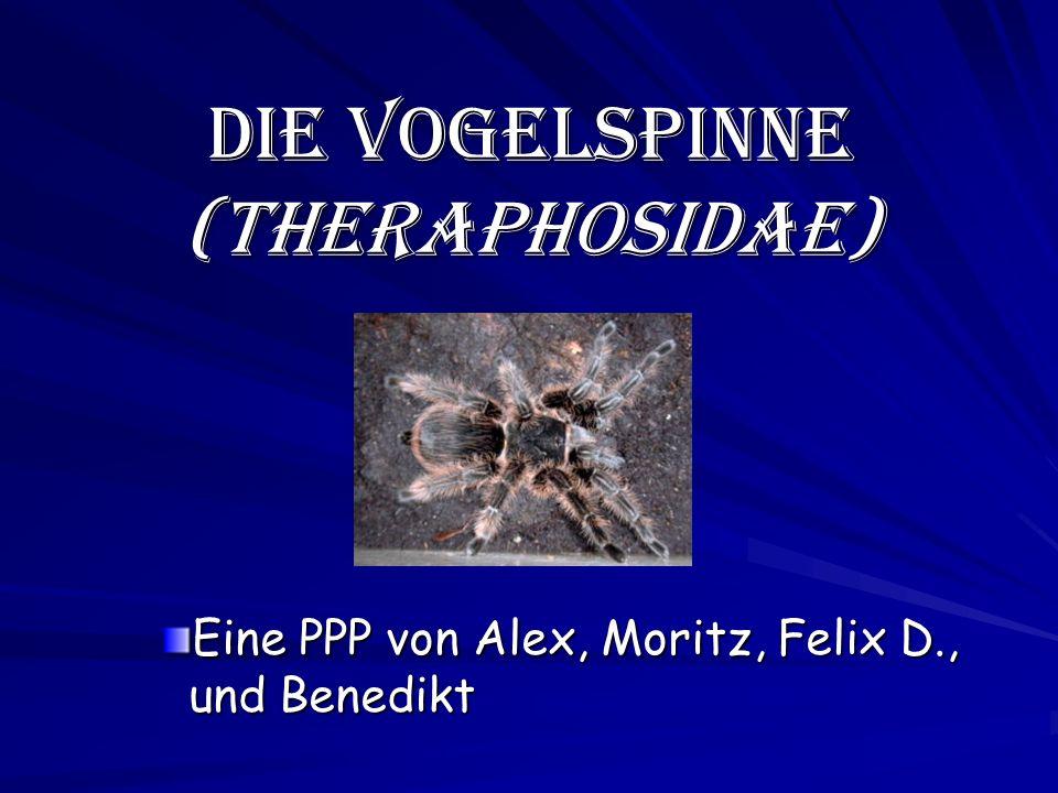 Die Vogelspinne (Theraphosidae) Eine PPP von Alex, Moritz, Felix D., und Benedikt