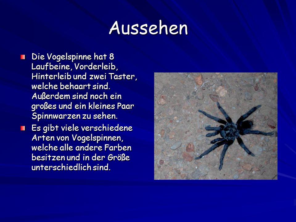 Alle Arten von Vogelspinnen AcanthopelminaeAviculariinaeEumenophorinaeHarpactirinaeIscohnocolinaeOrnithoctoninaePoecilotheriinaeSelenocosmiinaeSelengyrinae SpelopeminaeStromatopelminaeTheraphosinaeThrigmopoeinae (Alle diese Arten haben noch viele Unterarten) (insgesamt gibt es unzählige Arten, da immer wieder neue Arten entdeckt werden)