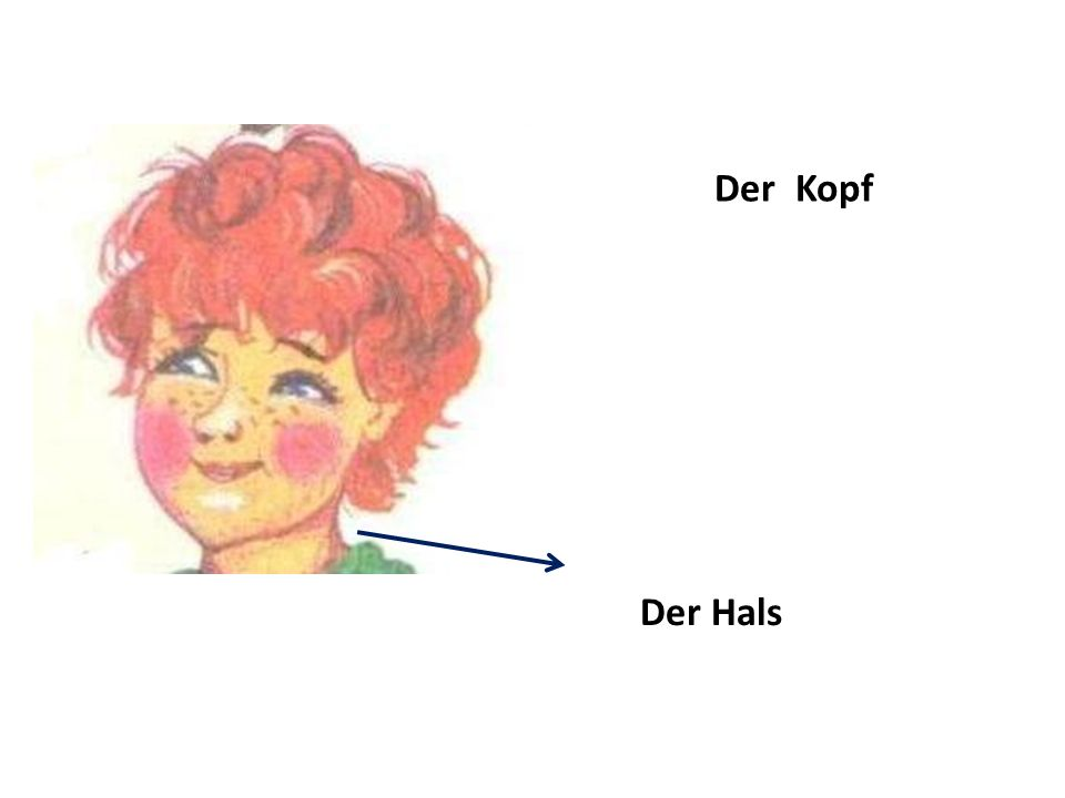 Der Kopf Der Hals