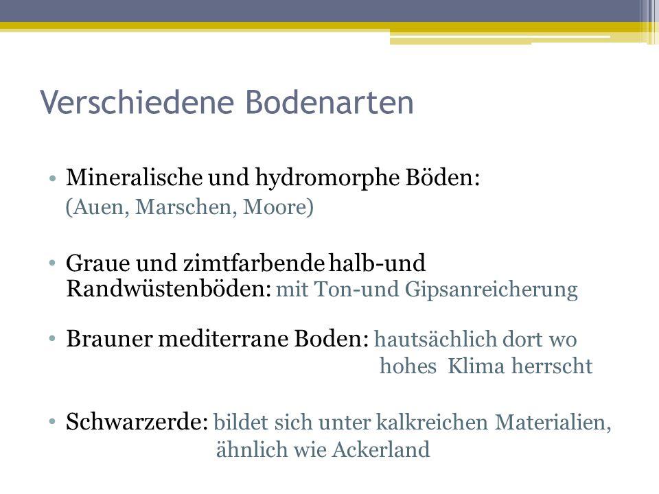 Verschiedene Bodenarten Mineralische und hydromorphe Böden: (Auen, Marschen, Moore) Graue und zimtfarbende halb-und Randwüstenböden: mit Ton-und Gipsanreicherung Brauner mediterrane Boden: hautsächlich dort wo hohes Klima herrscht Schwarzerde: bildet sich unter kalkreichen Materialien, ähnlich wie Ackerland
