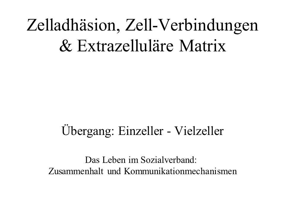 Zelladhäsion, Zell-Verbindungen & Extrazelluläre Matrix Übergang: Einzeller - Vielzeller Das Leben im Sozialverband: Zusammenhalt und Kommunikationmechanismen