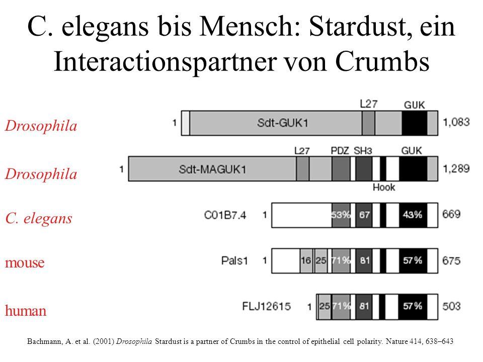 Bachmann, A.et al.