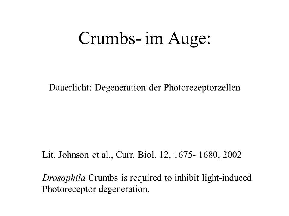 Crumbs- im Auge: Dauerlicht: Degeneration der Photorezeptorzellen Lit.