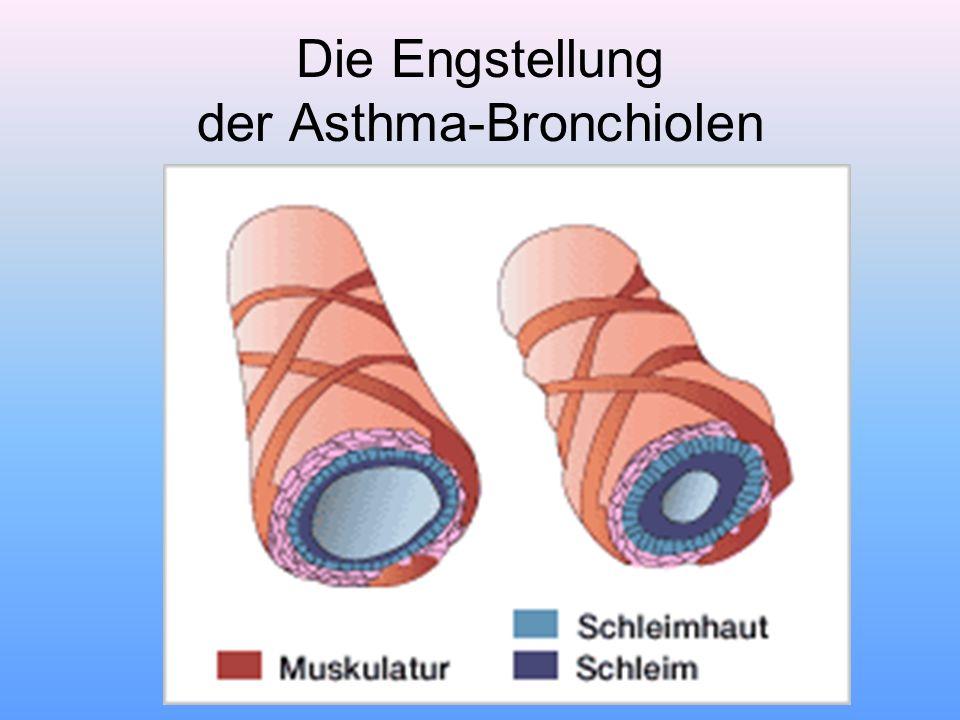 Die Engstellung der Asthma-Bronchiolen