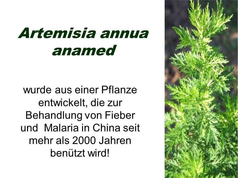 Artemisia annua anamed wurde aus einer Pflanze entwickelt, die zur Behandlung von Fieber und Malaria in China seit mehr als 2000 Jahren benützt wird!