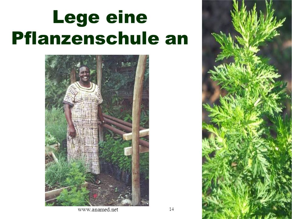 14 Lege eine Pflanzenschule an www.anamed.net