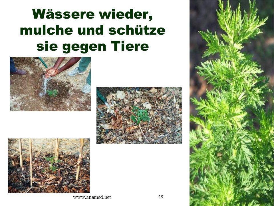 19 Wässere wieder, mulche und schütze sie gegen Tiere www.anamed.net