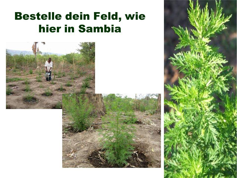 Bestelle dein Feld, wie hier in Sambia