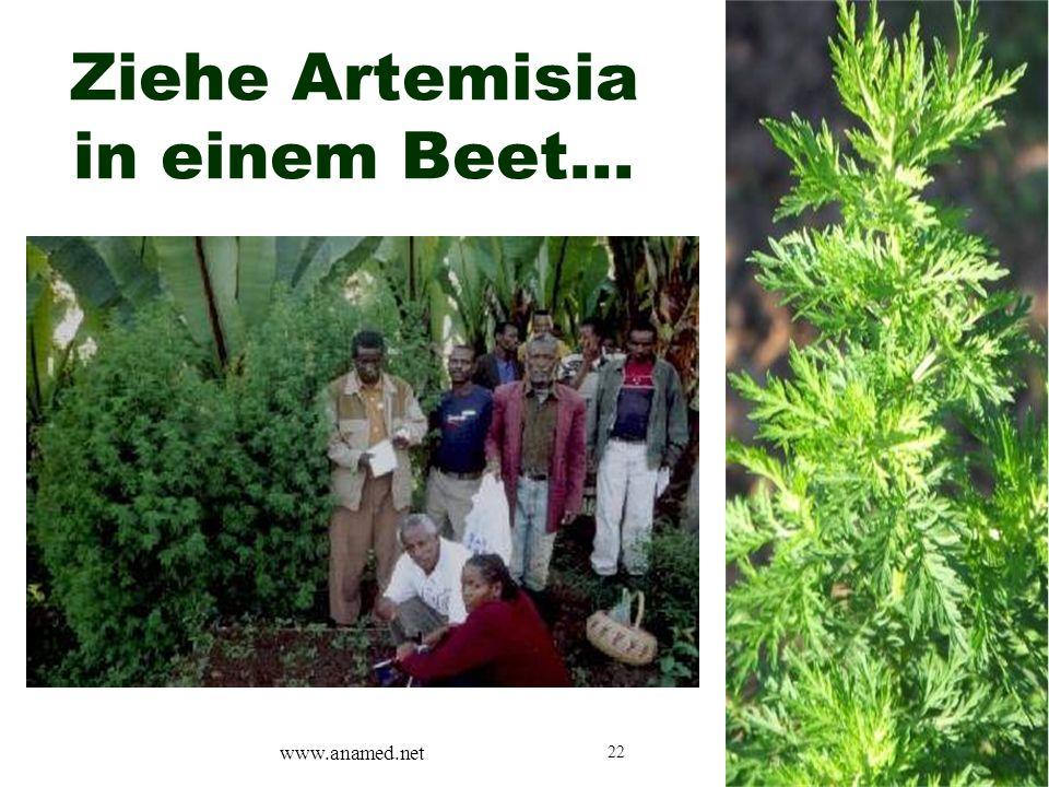 22 Ziehe Artemisia in einem Beet… www.anamed.net