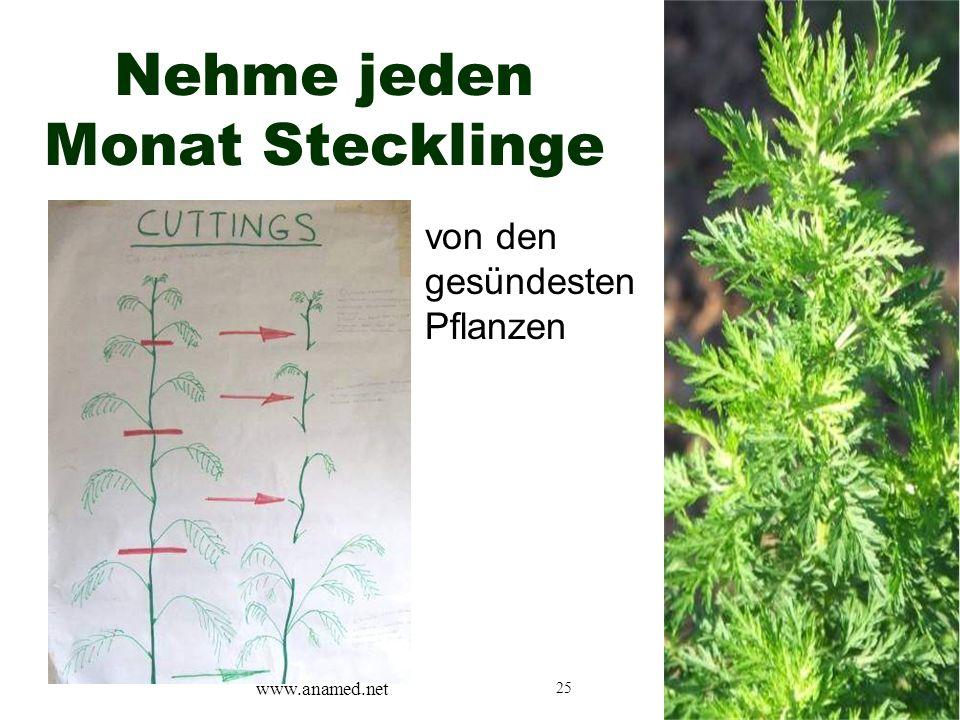 25 Nehme jeden Monat Stecklinge von den gesündesten Pflanzen www.anamed.net