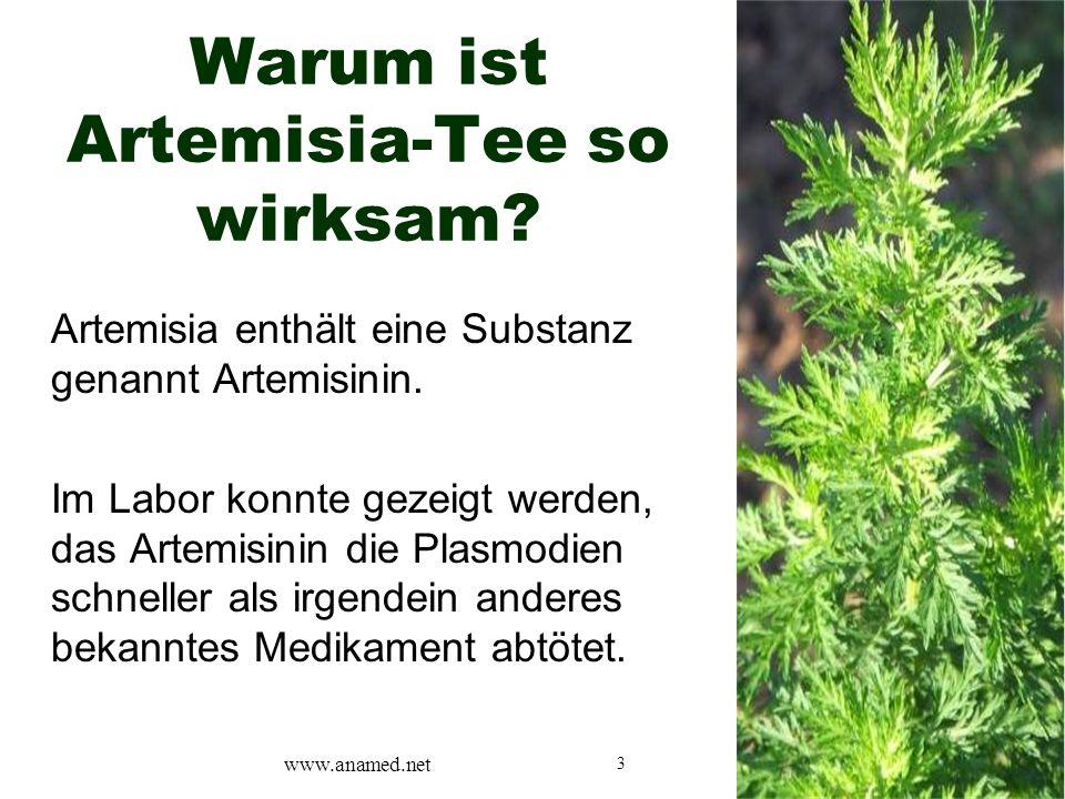 3 Warum ist Artemisia-Tee so wirksam? Artemisia enthält eine Substanz genannt Artemisinin. Im Labor konnte gezeigt werden, das Artemisinin die Plasmod
