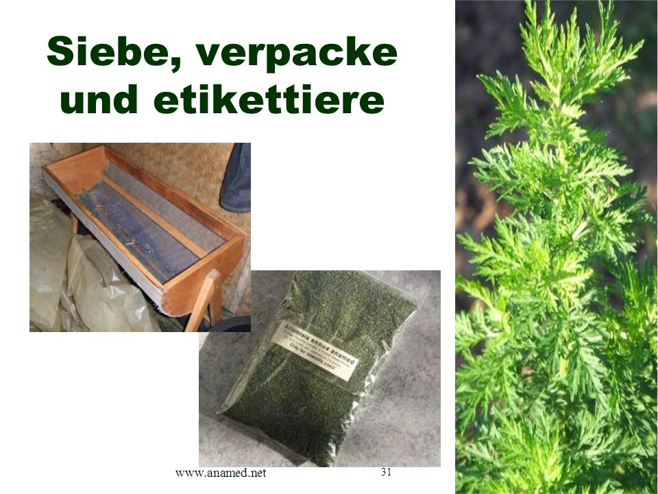 31 Siebe, verpacke und etikettiere www.anamed.net