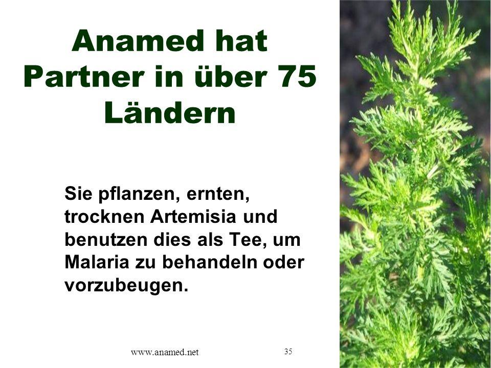 35 Anamed hat Partner in über 75 Ländern Sie pflanzen, ernten, trocknen Artemisia und benutzen dies als Tee, um Malaria zu behandeln oder vorzubeugen.