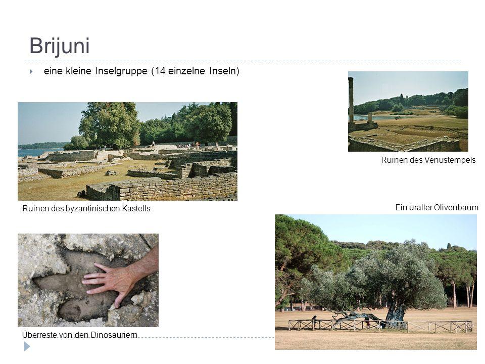 Brijuni  eine kleine Inselgruppe (14 einzelne Inseln) Ruinen des Venustempels Ruinen des byzantinischen Kastells Ein uralter Olivenbaum Überreste von den Dinosauriern