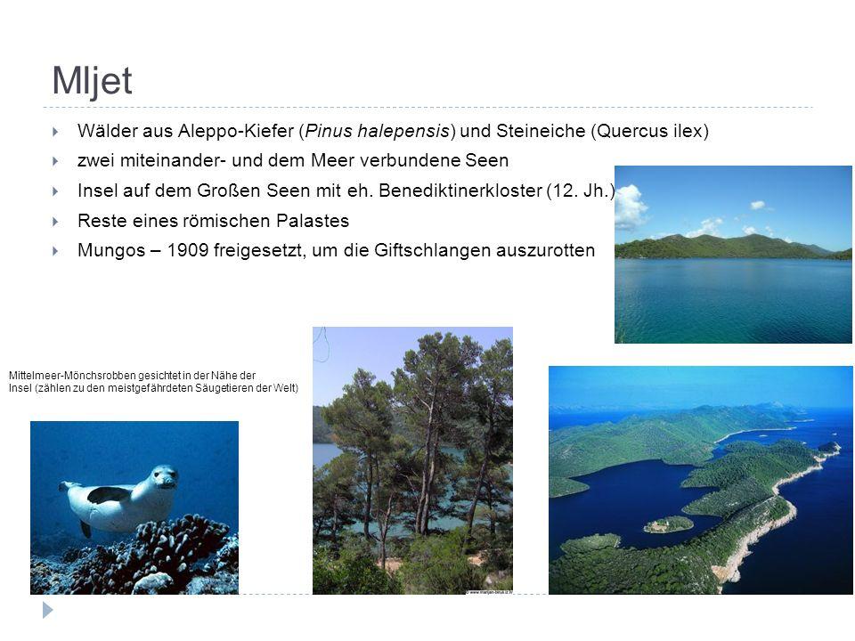 Mljet  Wälder aus Aleppo-Kiefer (Pinus halepensis) und Steineiche (Quercus ilex)  zwei miteinander- und dem Meer verbundene Seen  Insel auf dem Großen Seen mit eh.