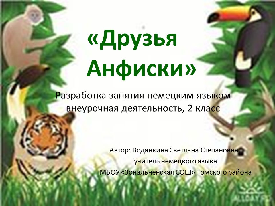 Sie ist in Afrika verbreitet, wo sie durch die Savanne schreitet und Blätter von den Bäumen frißt - ein Riese, der 6 Meter mißt.