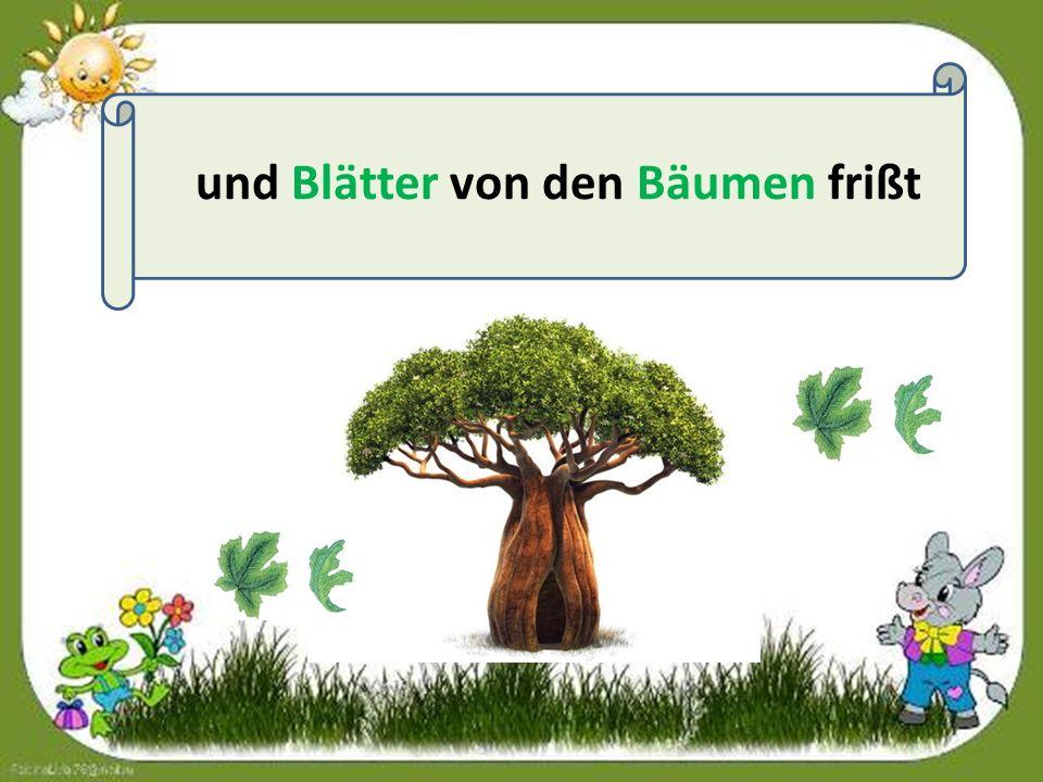 und Blätter von den Bäumen frißt