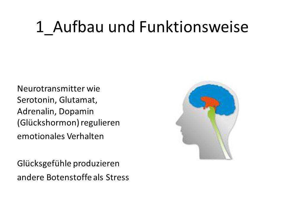 1_Aufbau und Funktionsweise Neurotransmitter wie Serotonin, Glutamat, Adrenalin, Dopamin (Glückshormon) regulieren emotionales Verhalten Glücksgefühle produzieren andere Botenstoffe als Stress