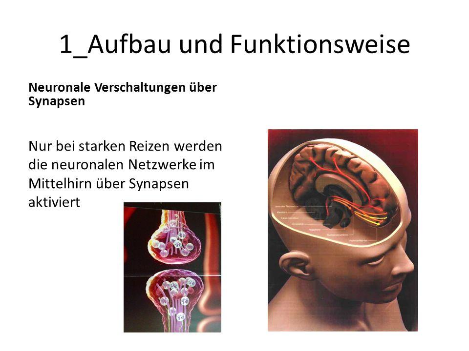 1_Aufbau und Funktionsweise Neuronale Verschaltungen über Synapsen Nur bei starken Reizen werden die neuronalen Netzwerke im Mittelhirn über Synapsen
