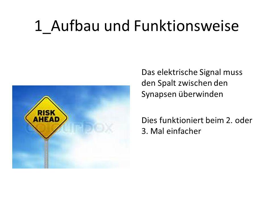 1_Aufbau und Funktionsweise Das elektrische Signal muss den Spalt zwischen den Synapsen überwinden Dies funktioniert beim 2.