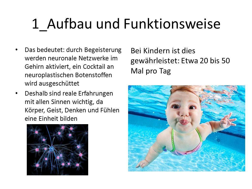 1_Aufbau und Funktionsweise Das bedeutet: durch Begeisterung werden neuronale Netzwerke im Gehirn aktiviert, ein Cocktail an neuroplastischen Botenstoffen wird ausgeschüttet Deshalb sind reale Erfahrungen mit allen Sinnen wichtig, da Körper, Geist, Denken und Fühlen eine Einheit bilden Bei Kindern ist dies gewährleistet: Etwa 20 bis 50 Mal pro Tag