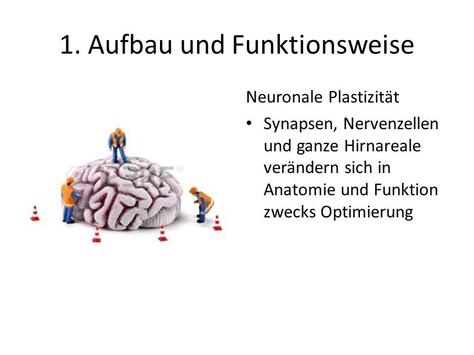 1. Aufbau und Funktionsweise Neuronale Plastizität Synapsen, Nervenzellen und ganze Hirnareale verändern sich in Anatomie und Funktion zwecks Optimier