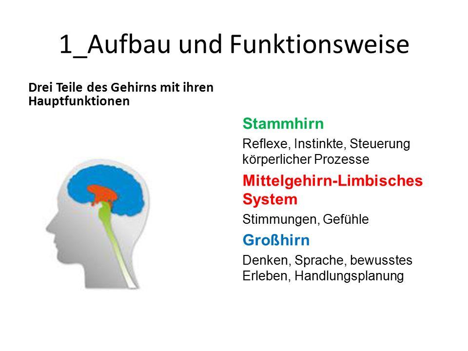 1_Aufbau und Funktionsweise Drei Teile des Gehirns mit ihren Hauptfunktionen Stammhirn Reflexe, Instinkte, Steuerung körperlicher Prozesse Mittelgehirn-Limbisches System Stimmungen, Gefühle Großhirn Denken, Sprache, bewusstes Erleben, Handlungsplanung