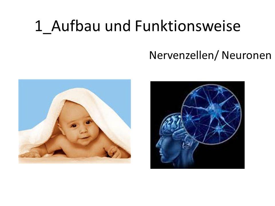 1_Aufbau und Funktionsweise Nervenzellen/ Neuronen