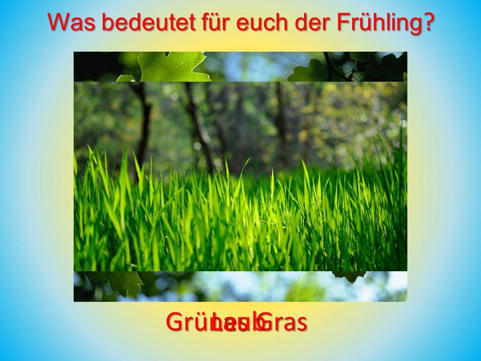 Grünes Gras Laub