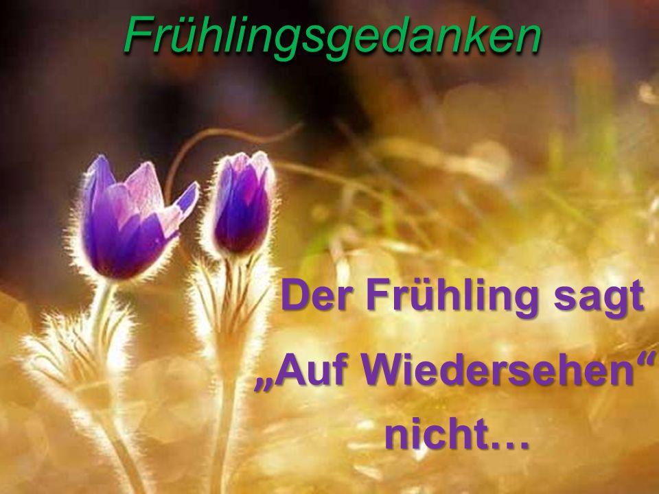 """FrühlingsgedankenFrühlingsgedankenDer Frühling sagt """" Auf """" Auf Wiedersehen """" nicht…"""