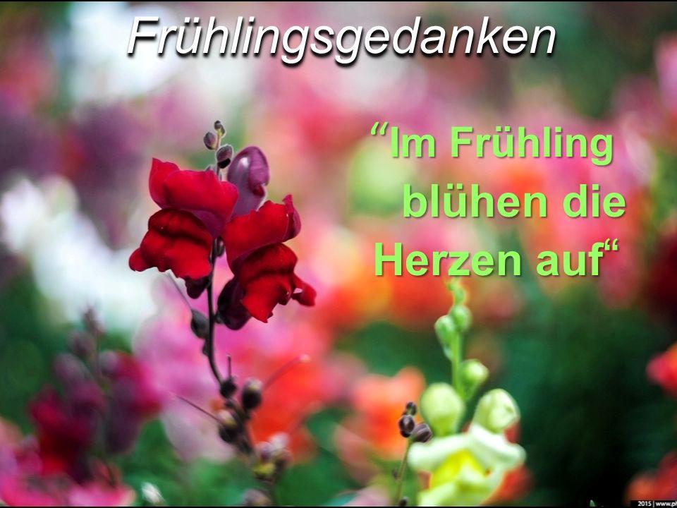 """"""" Im Frühling blühen die Herzen auf """" FrühlingsgedankenFrühlingsgedanken"""