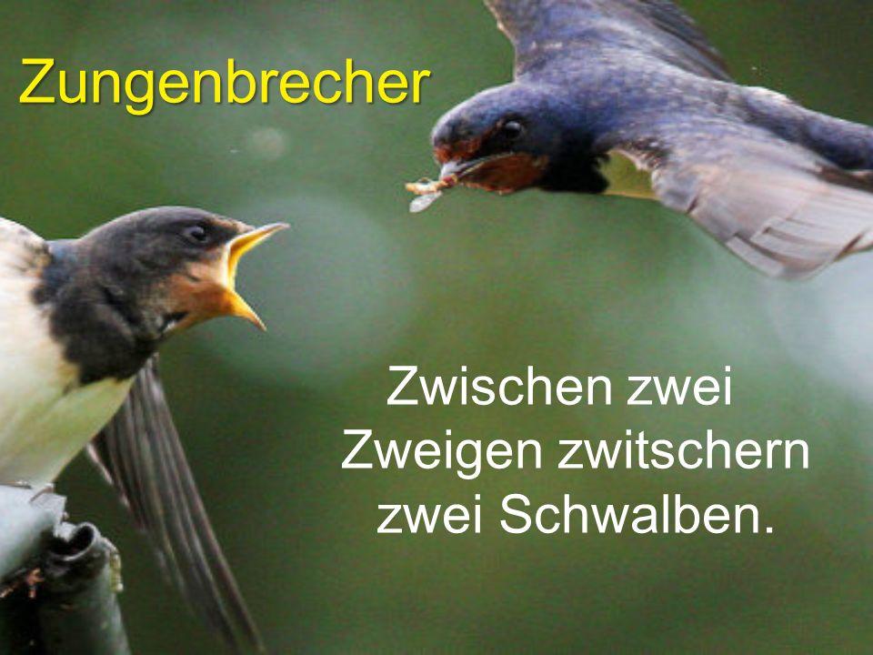 Zungenbrecher Zwischen zwei Zweigen zwitschern zwei Schwalben.