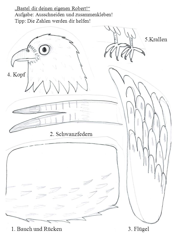 4.Kopf 1. Bauch und Rücken 5.Krallen 2. Schwanzfedern 3.