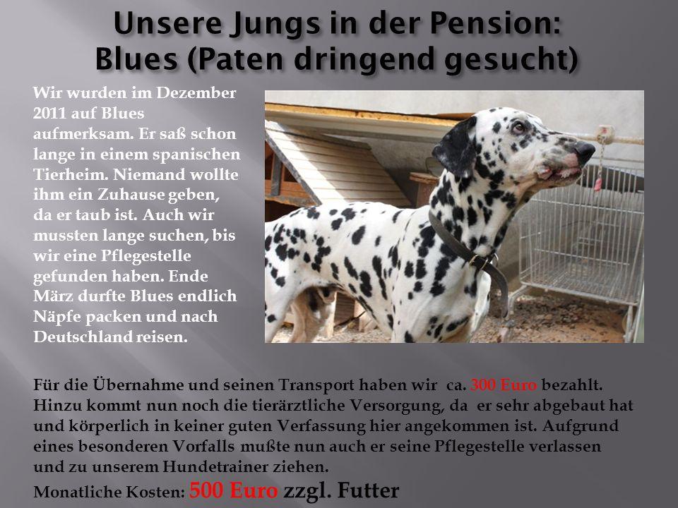 Die Übernahmegebühren für die zwei liegen zwischen 600 und 800 Euro zuzüglich Tierarztkosten Diese beiden kommen aus der spanischen Tötung Gesser
