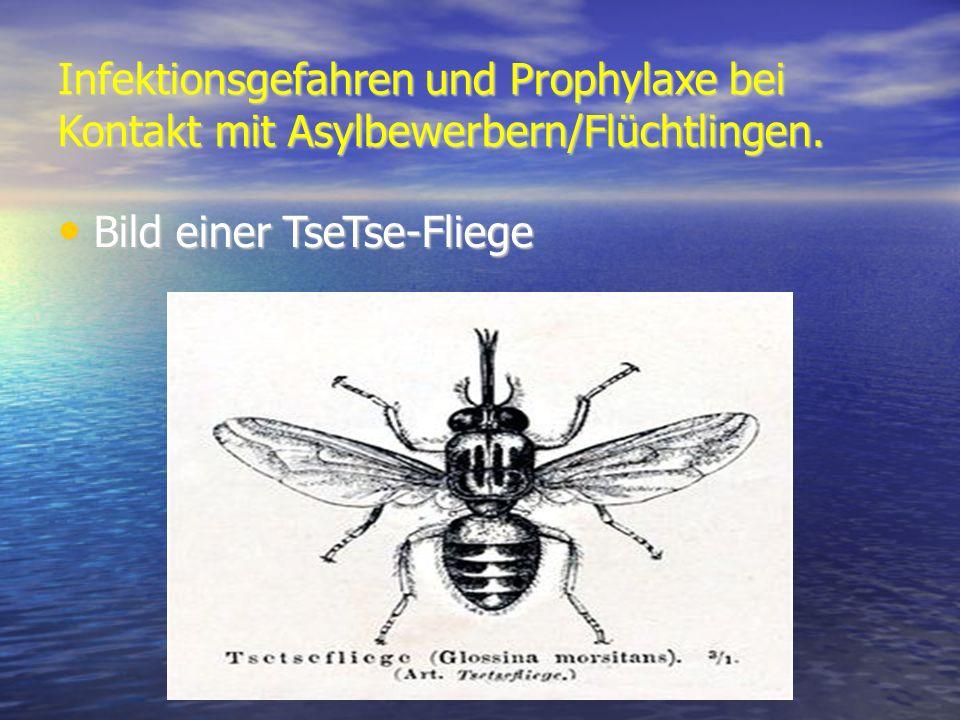 Infektionsgefahren und Prophylaxe bei Kontakt mit Asylbewerbern/Flüchtlingen. Bild einer TseTse-Fliege Bild einer TseTse-Fliege